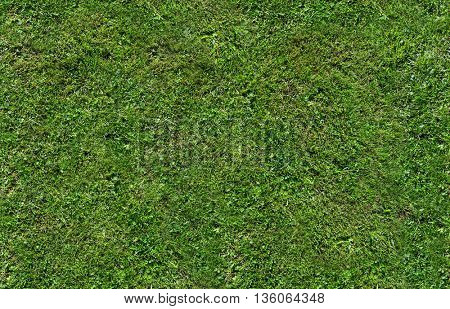 photo with green grass background