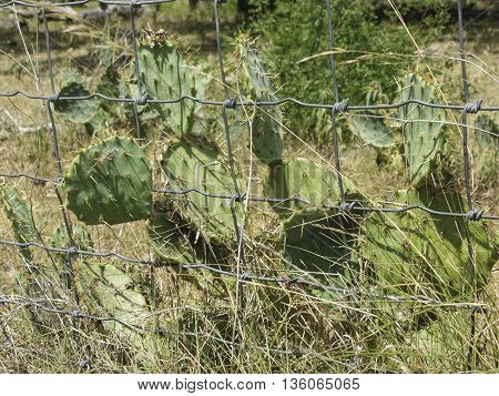 A green cactus behind a wire fence.