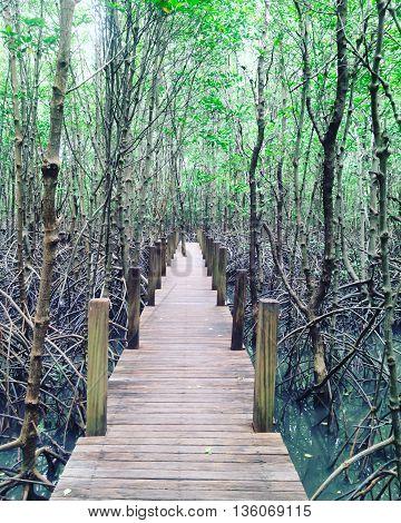 wood walkway to Kung Krabaen chanthaburi at thailand