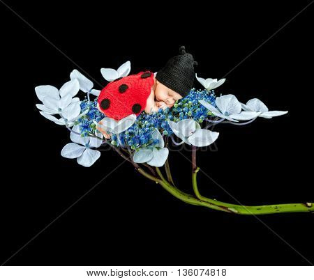sleeping newborn on flower dark background