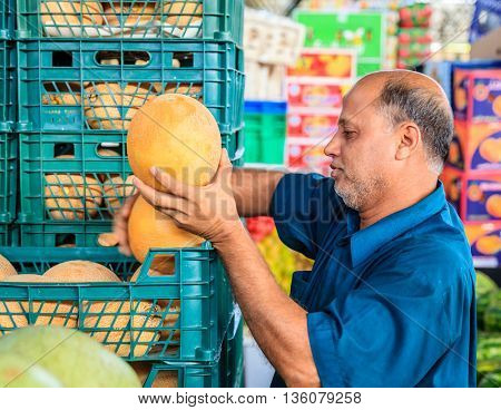 Dubai, June 4, 2016: a farmer sorting through melons at the fruit and vegetable market in Dubai, UAE