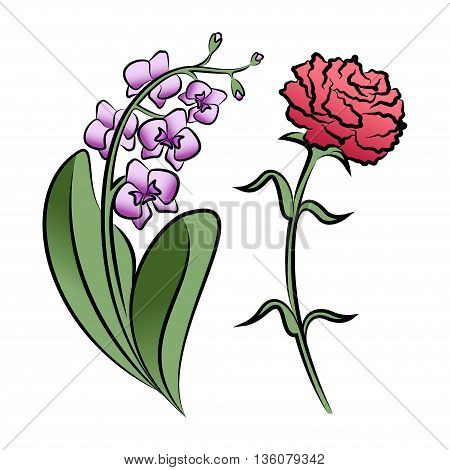 Set of two outlined flowers. Orchid and carnation In sketch hand drawn style. Vector illustration
