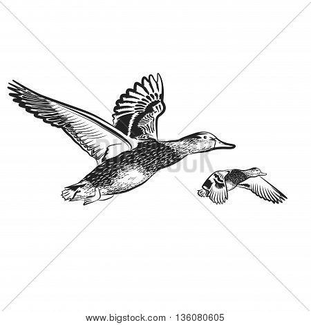 duck on the white background vector illustration
