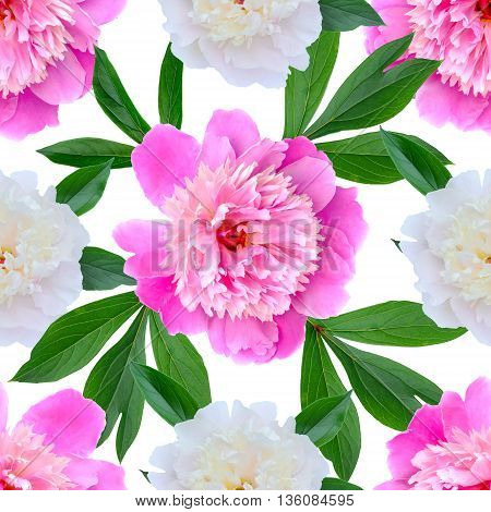 seamless floral pattern with pink and white peonies
