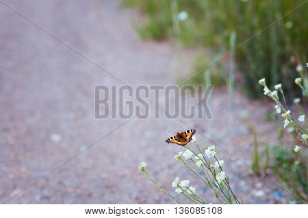 butterfly sits on a branch with little white flowers in the meadow a lot of free space road