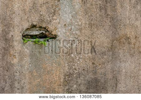 Small plants germinated and grown up from the cracked concrete wall background