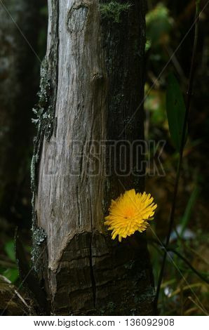 natural contrast of a flower is born next to a trunk