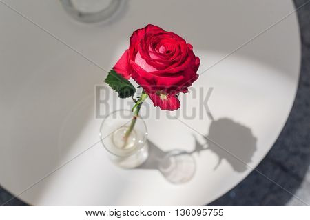 Rose in glass vase on a table in cafe