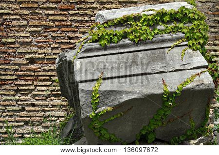 Big Rock entwined with green plant, opposite wall