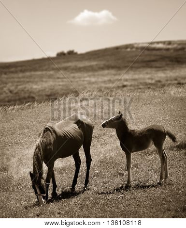 mother and baby horse in a field.