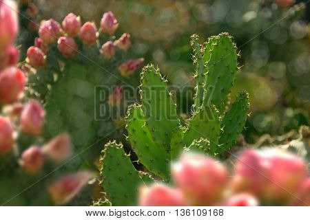 close up shot of cactus flower