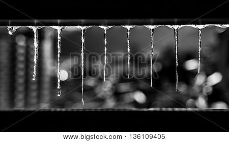 Beautiful Icicles Glint In Winter