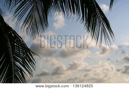 A beautiful sky background with Palm trees and dramatic clouds.