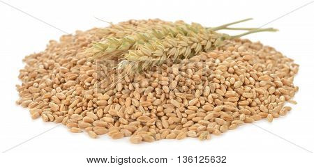 Wheat isolated on white background close up