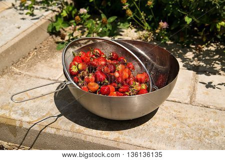 Metal bowl with strawberries is on the floor