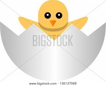 yellow newborn chicken in the broken egg shell,  isolated