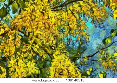 Golden chain tree with delicate yellow cluster of flowers
