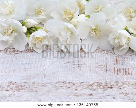 Lovely sweet mock-orange flowers on the rustic white painted background