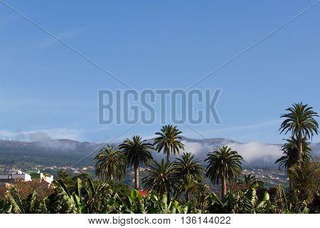 Landscape With Palm Tree. Phoenix Dactylifera, Tenerife, La Orotava View.