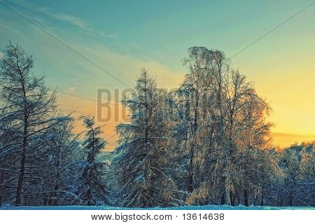 Winter Evening Landscape