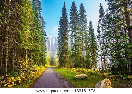 Morning mist on the Emerald Lake, Yoho Park, Canada. Alley in the coniferous forest