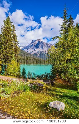 Blossoming glade in coniferous forest. Beautiful day on the Emerald Lake. Rocky Mountains, British Columbia