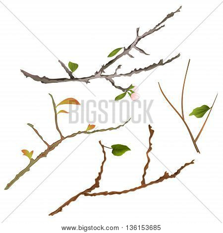 Branch various Sprigs twig tree and bush vector illustration