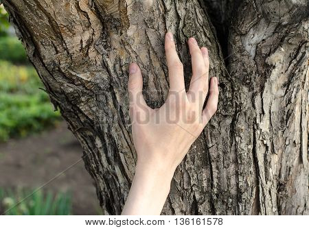 A Man's Hand Touches The Bark Of A Tree In Nature