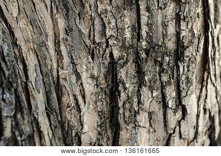 Natural Texture Theme: Tree Bark