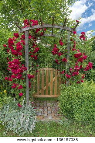 Small garden door made of wood with rose arch of red blooming roses