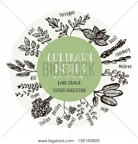Set of Culinary herbs. Hand drawn herbs collection. Vector Illustration