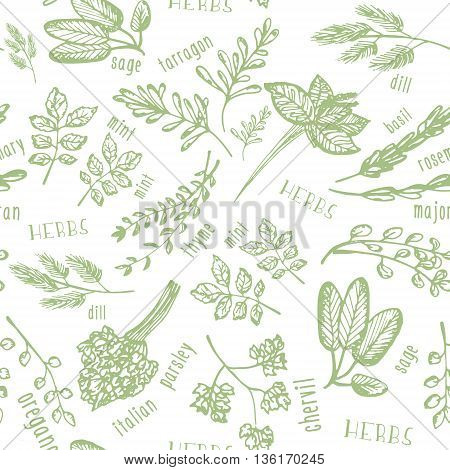 Seamless pattern with hand drawn spicy herbs. Culinary kitchen background with herbs. Perfectly look on kitchen textile fabric. Vector illustration