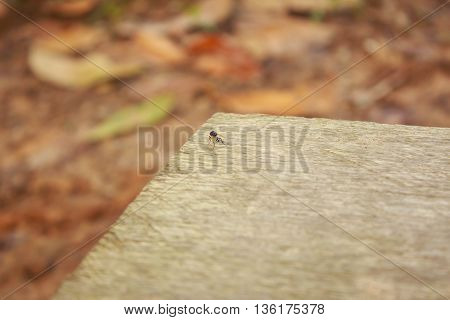 House fly on wood background in garden