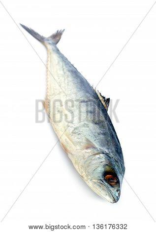 Image of fresh mackerel fish isolated on white background.