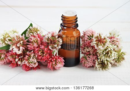 Apothecary dark glass bottle red clover extract. Skincare benefits. Fresh clover flowers.