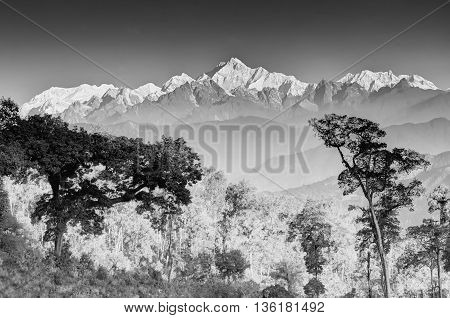 Beautiful view of trees and Silerygaon Village with Kanchenjunga mountain range at the background moring light at Sikkim India. Black and white stock image.