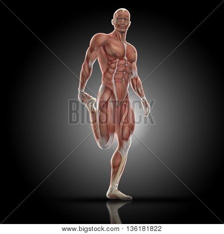 3D render of a medical figure bodybuilder with muscle map in a leg stretch pose