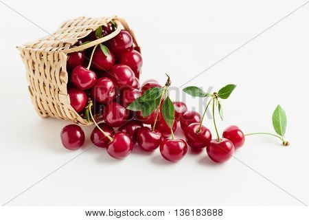 Basket of fresh sour cherries