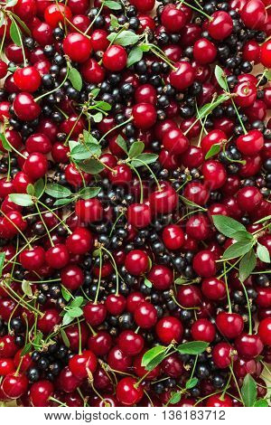 Fresh berries of cherry and black currant