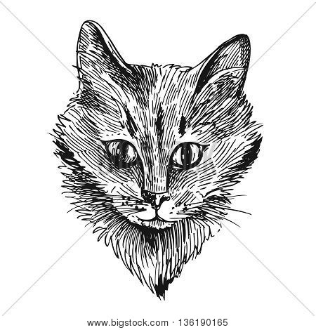 Vector hand drawn illustration head of cat. Sketch style. Ink drawing of cat.