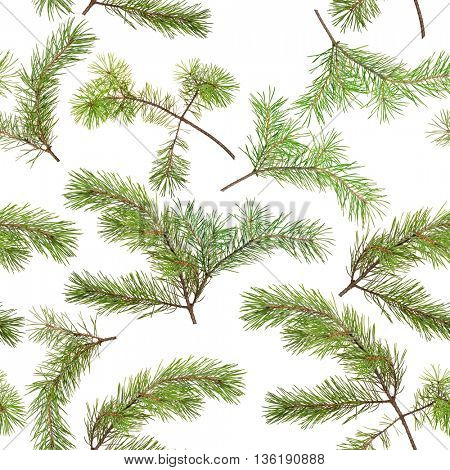 seamless background from green pine branches isolated on white
