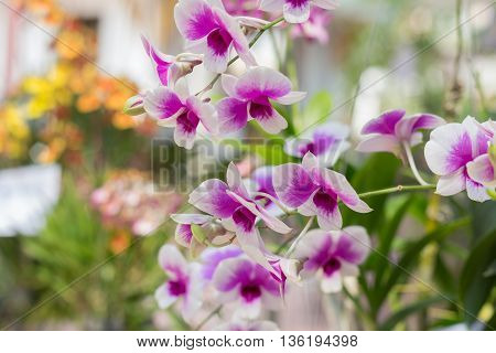orchid flowers with leaves on out of focus garden background