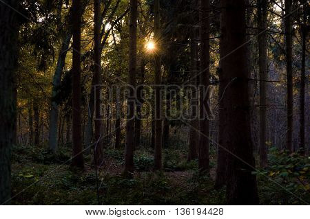 Dense hardwood tree forest with sunlight shining from the top through darkness during the autumn season