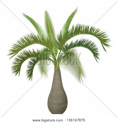 Vector tropical exotic high detailed palm tree isolated.