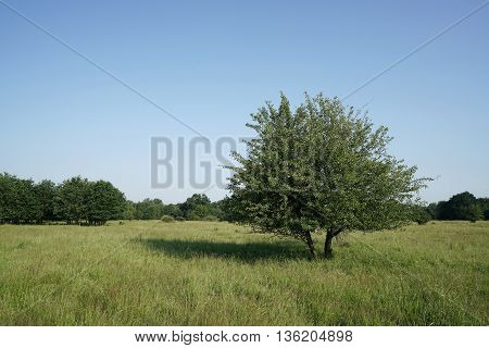 single tree on a meadow in the park
