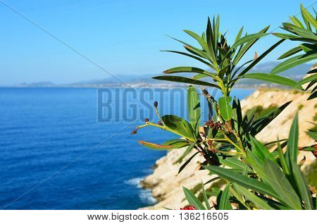 Beautiful landscape.Close up of tree at seaside.