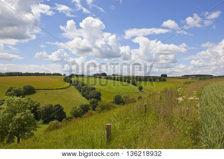 picturesque agricultural landscape with wheat field in the yorkshire wolds under a blue cloudy sky