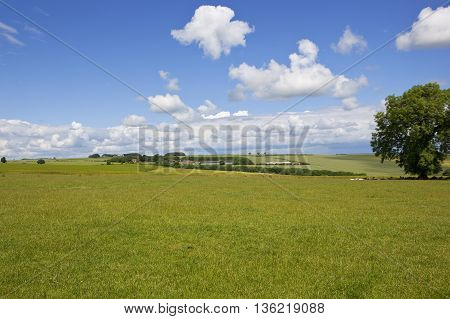 a green grass meadow in the scenic yorkshire wolds under a blue cloudy sky in summer