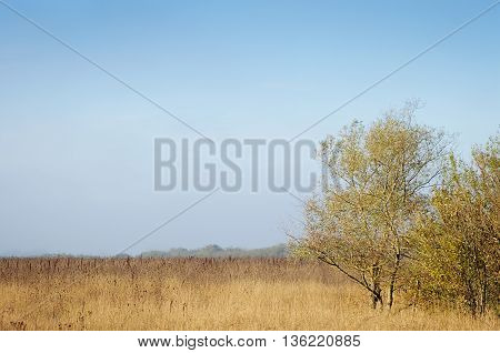 Autumn landscape in the country. Yellow field and blue sky.