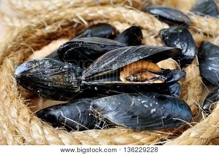 Fresh open Mussel on the background of sea cables, seafood Italian cuisine